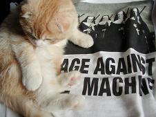 apu with rage against the machine.JPG